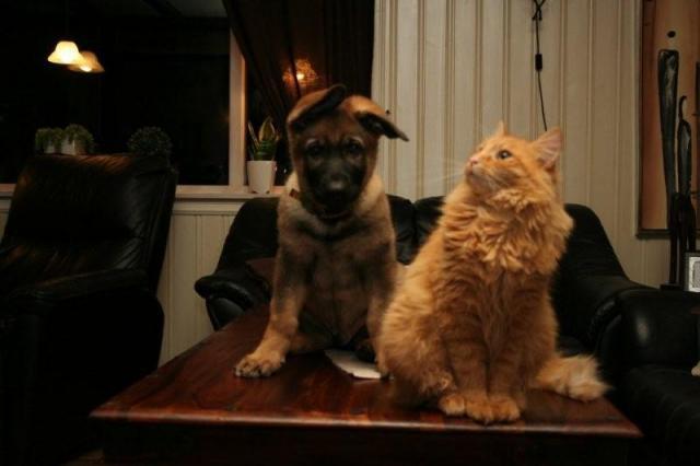 Det satt to katter...