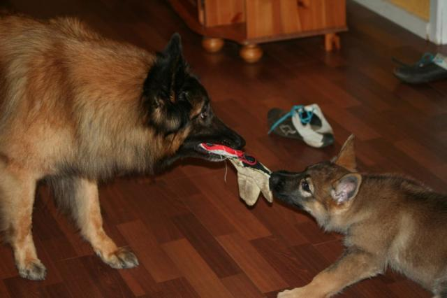 Anja og Shiba 1